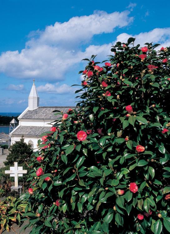 Mizunoura Church & Camellia 3