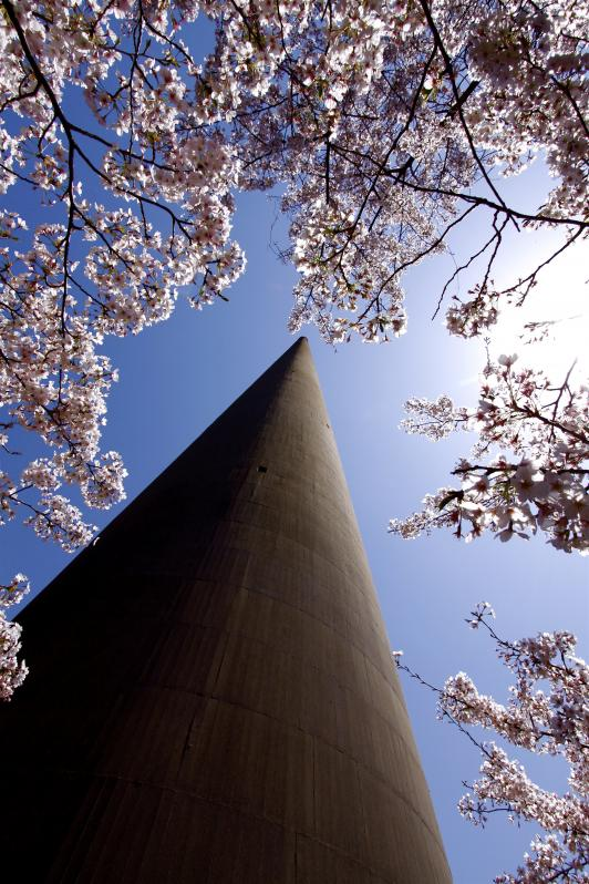 Hario RadioTower (Cherry Blossom) 3