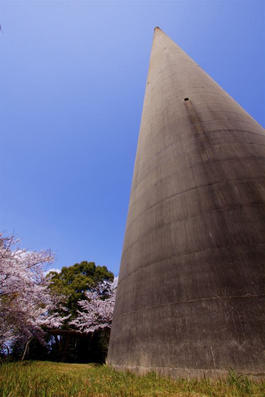 Hario RadioTower (Cherry Blossom) 4
