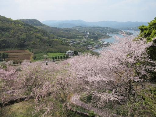 Shihondo Park - Cherry Blossom 2