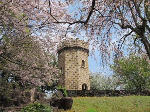 Shihondo Park - Cherry Blossom 4