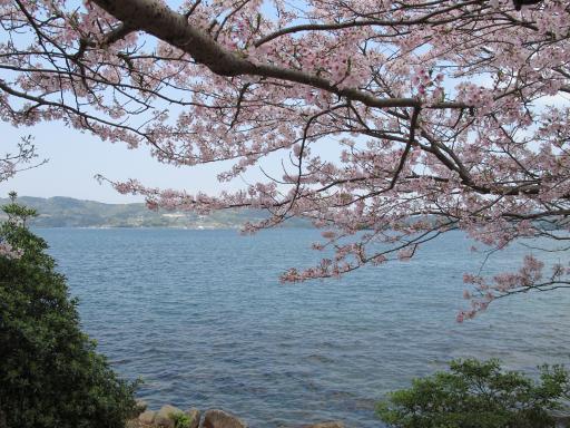 Shihondo Park - Cherry Blossom 5