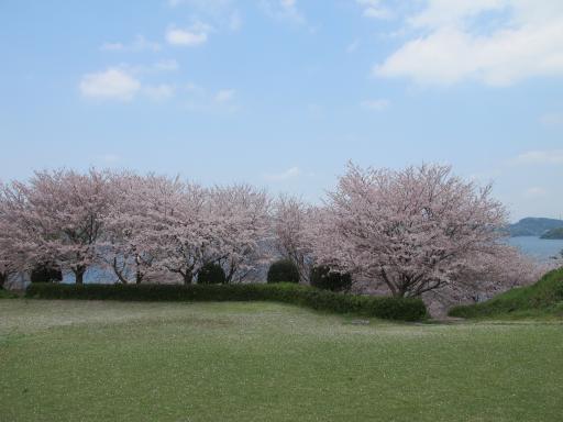Shihondo Park - Cherry Blossom 6