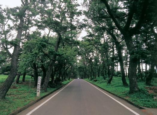 Ojika - Hime-no-Matsubara (Pine Grove)