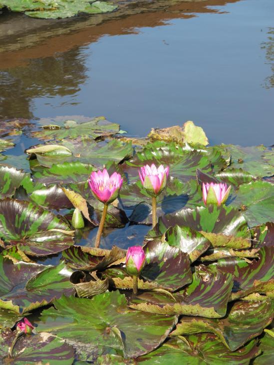 Karako Wetland Park - Karako Lotus Garden 1