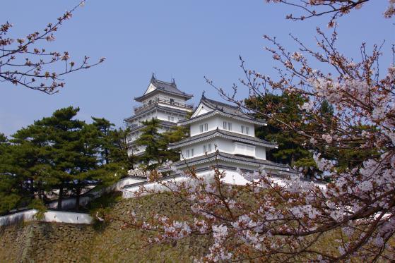 Shimabara Castle - Cherry Blossom 2