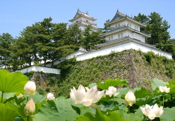 Shimabara Castle and Lotus Flower