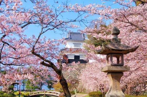 Omura Park - Cherry Blossom