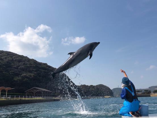 Dolphin Park 1