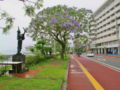 Jacaranda Tree (Obamacho) 2