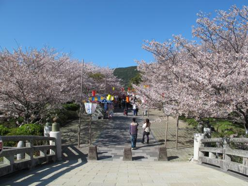 Tachibana Park - Sakura 4
