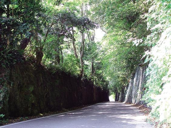 Green Tunnel 1